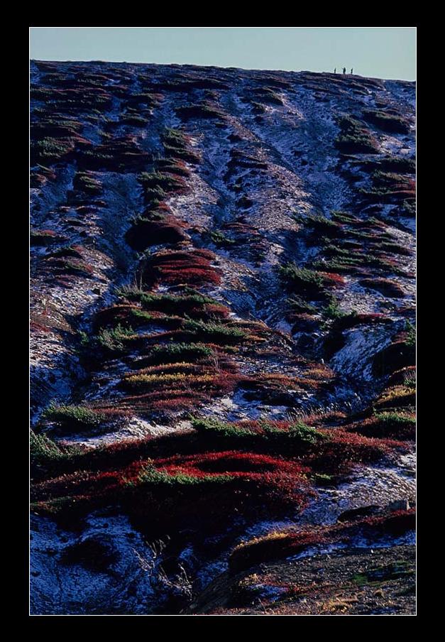 第13回 秋山庄太郎記念 花見山フォトコンテスト2018 - 福島県花見山のフォトコン情報